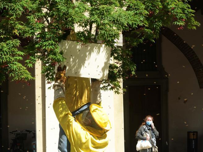 Treviglio, sciame di 10 mila api si ferma in piazza